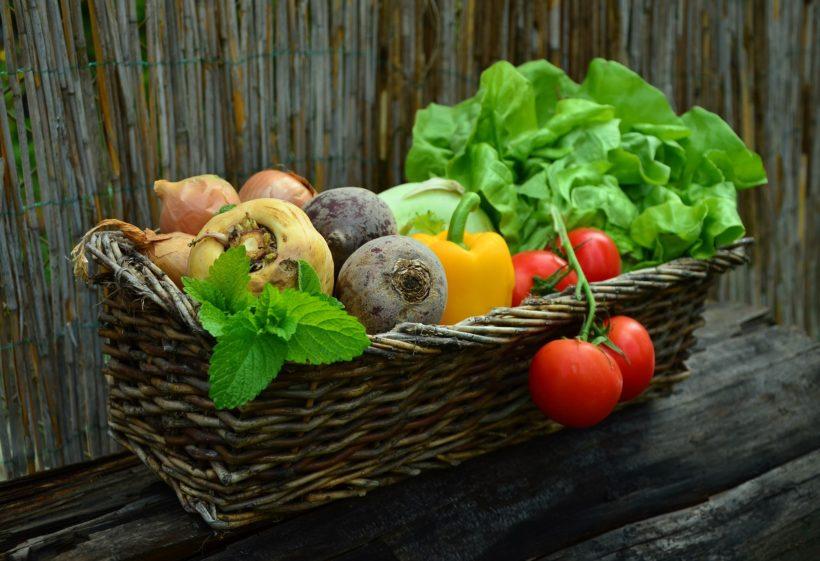 ogrod rolnictwo ekologiczne