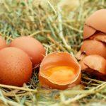 Jak wykorzystać skorupki jajek w ogrodzie?