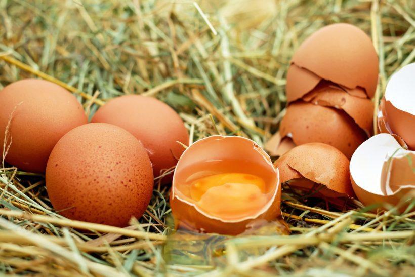 skorupki-jajek-wykorzystanie