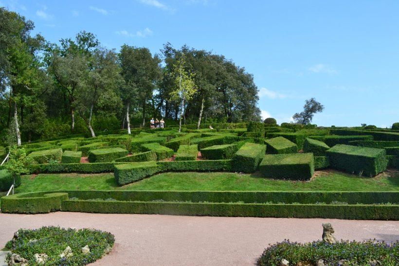 bukszpan-topiary1