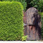 Zielone ogrodzenie-jakie rośliny na żywopłot?