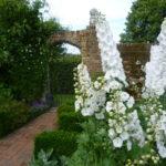 Biały ogród- 10 bylin kwitnących na biało