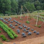 Dlaczego warto dziś mieć ogród warzywny?