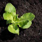 Hartowanie rozsady warzyw i ziół- co zrobić żeby przyjęły się w gruncie?