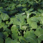 Naturalne nawozy w ogrodzie – który wybrać i jak stosować?