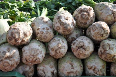 seler korzeniowy uprawa