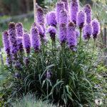 Jakie rośliny na podmokły teren?- 8 najlepszych gatunków