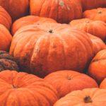 Dynia – charakterystyka, uprawa, pielęgnacja