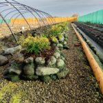 Podmokła działka- sadzenie roślin na podwyższeniach