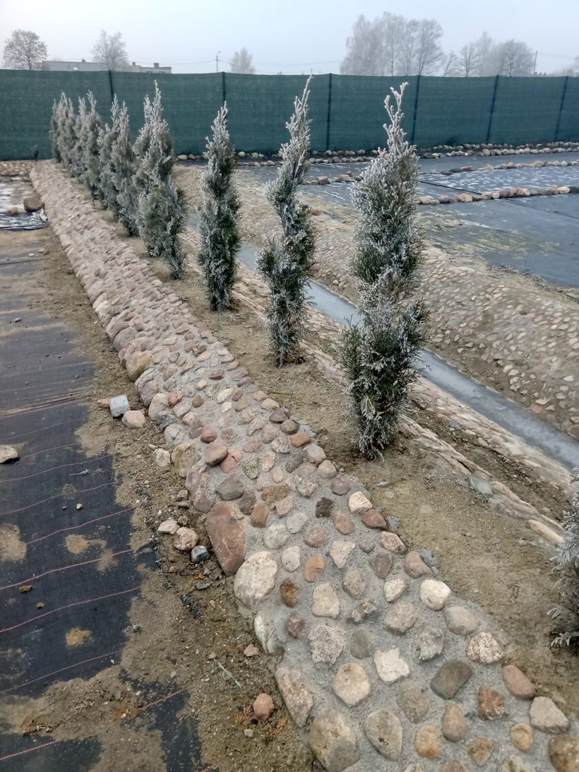 rośliny na podwyższeniach
